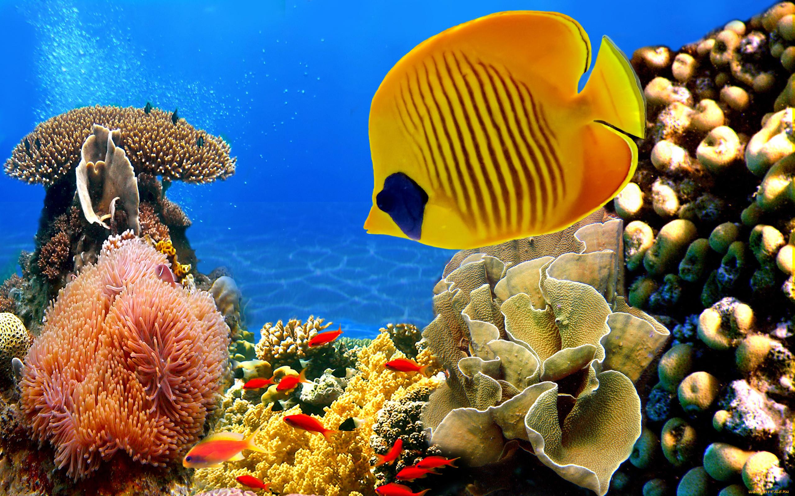 ведь животные красного моря картинки всё же, если